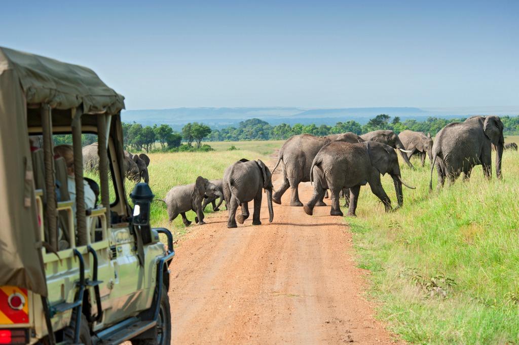 Julie Schafer   Travel by Design   Safari   Family Travel
